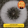 Artwork for Look at My Ice Hole! Tench and Hamerhead Fish N Chips EP 220