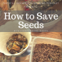 Artwork for SG590: How to Save Seed with Cheryl Moore-Gough