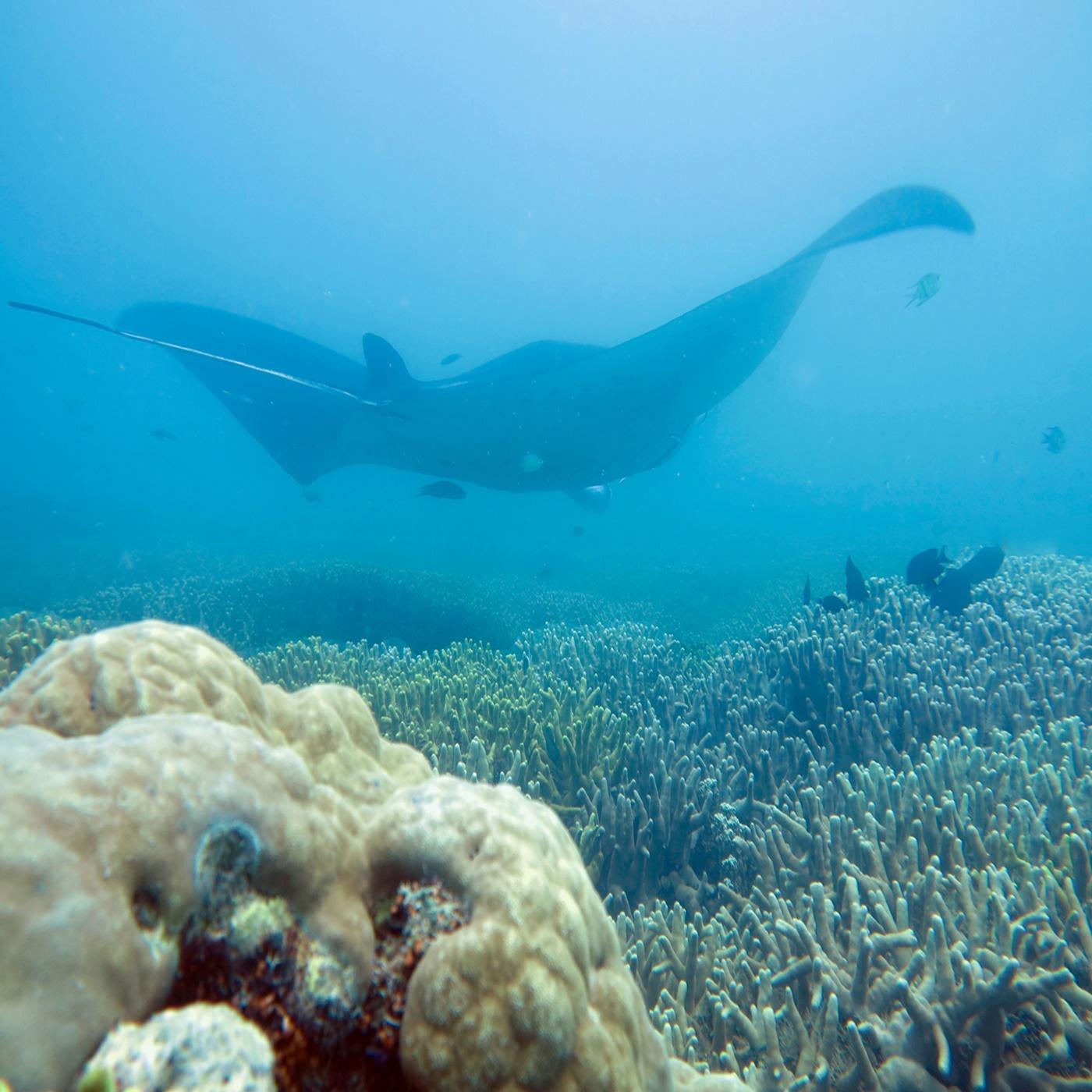 Ep. 3 Cynthia Matzke: Filming a way to Ocean Health