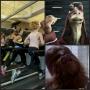 Artwork for Episode 1811 - Chewie vs Jar Jar