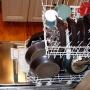 Artwork for Episode 39 - Flash On Your Dishwasher