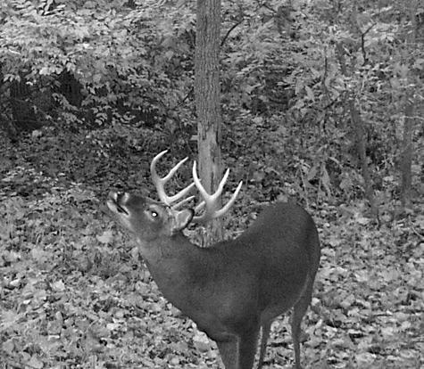 Rut Tactics to keep pressure off your deer woods HFJ 110