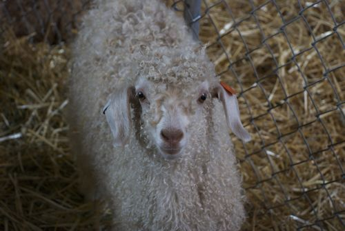 Black Sheep 2011 Recap - Episode 158 - The Knitmore Girls