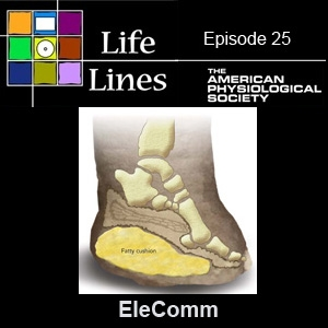 Episode 25: EleComm