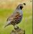 Califonia bird hunting and politics show art