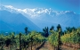Artwork for Ep 243: Maipo Valley of Chile - Top Cabernet We Can Afford!