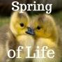 Artwork for 04-15-18 Spring of Life