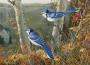Artwork for JIM BAKER'S BLUE JAY YARN by MARK TWAIN
