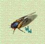Artwork for Cicadas