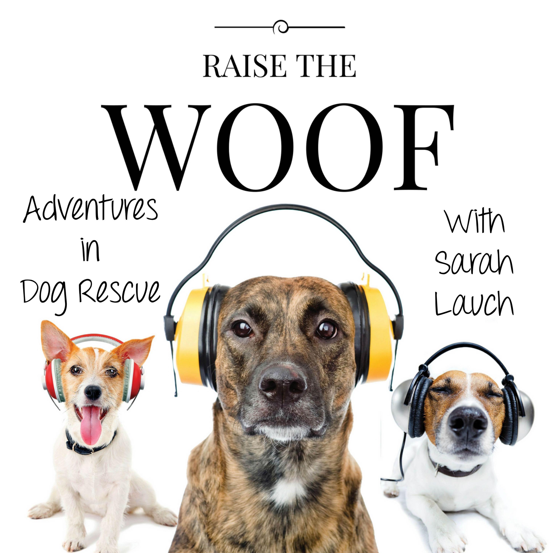 Raise The Woof show art