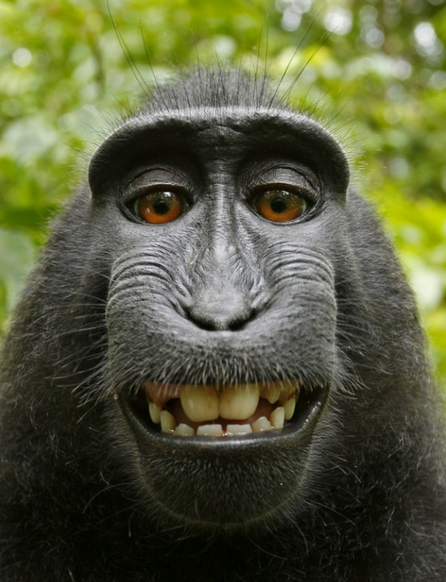 Free Monkey Smiles