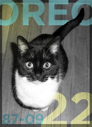 Oreo at 22