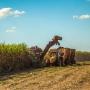 Artwork for Especial Perspectivas 2021 | Cana, açúcar e etanol