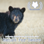 Artwork for Cautiously Optimistic: Alberta Ready To Allow Rehab For Bears (514)