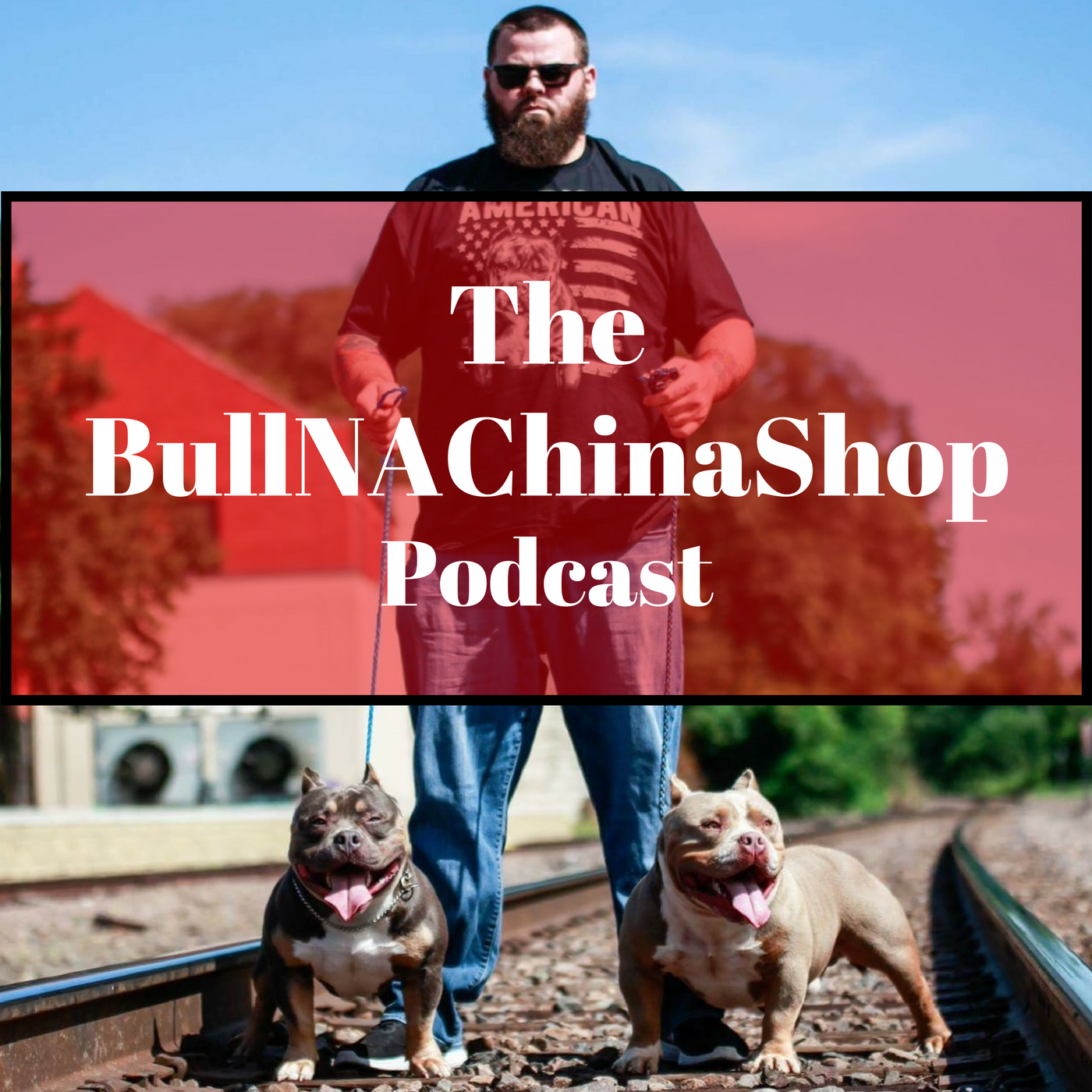 The BullNAChinaShop Podcast show art