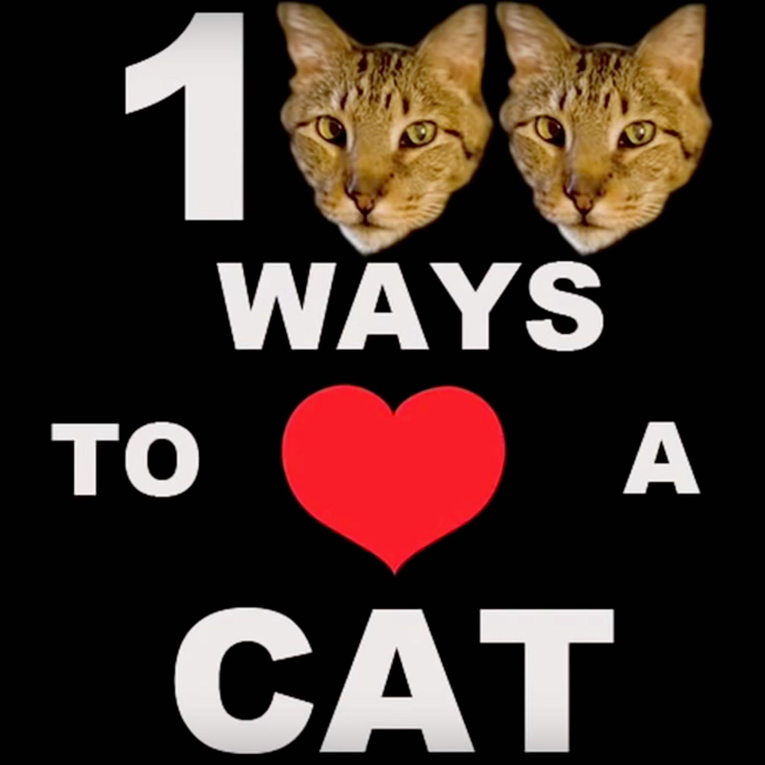 100 Ways to Love A Cat  show art