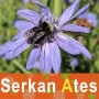Artwork for 128 – Serkan Ates – Livestock forage plants and bees