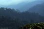 Artwork for Indonesia's Leuser Ecosystem under threat, plus tracking bird movement in Puerto Rico