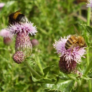 Bumblebees, apps and feedback from students