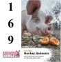 Artwork for Episode 169: Animal sanctuaries with Elan Abrell