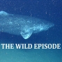 Artwork for Greenland Shark : The Shark in Darkness