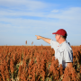 Artwork for An Agronomist's Perspective with Brent Bean, Ph.D.
