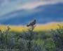 Artwork for Photographing in National Wildlife Refuges