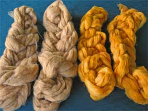 YST Episode 52 Walnut Leaf and Indigo dyeing of fiber
