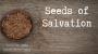 Artwork for Seeds of Salvation