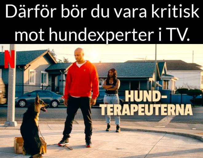 Därför bör du vara kritisk mot hundexperter i TV