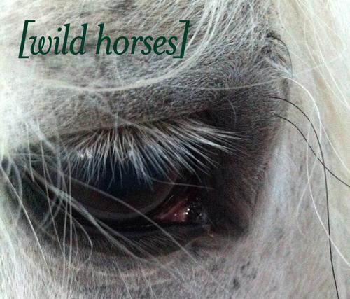 Untitled [Wild Horses]