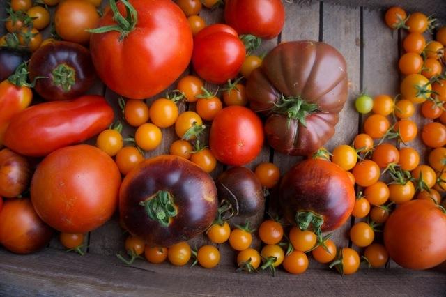 Dr. Cowan Tomatoes