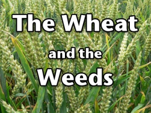 FBP 464 - The Wheat And The Weeds