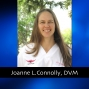 Artwork for 223 Animal Teachings with Joanne L. Connolly, DVM