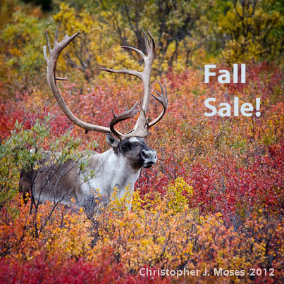 Fall 2015 SuperPack Lesson Sale