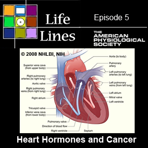 Episode 5: Research on Heart Hormones and Cancer