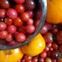 Artwork for 12. Grönsaksodling för nybörjare - Skörd