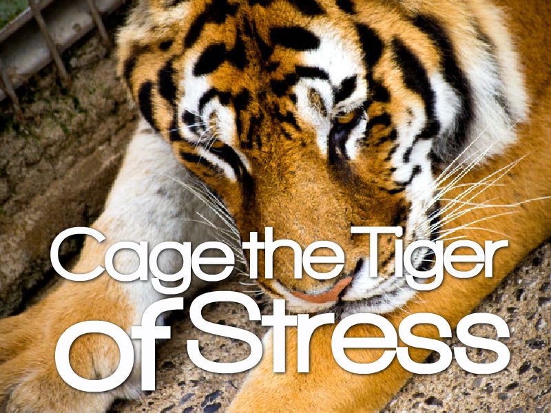 """Cage The Tiger of Stress"" with Dr. Pete Sulack"
