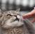 Cats, Dogs, Qualified Immunity, and Super Hella Deep Stuff show art