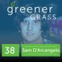 Artwork for Sam D'Arcangelo - Voting for Cannabis (ep38)