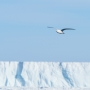 Artwork for Snow Petrels in the Sky