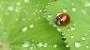Artwork for Best Pest Prevention Strategies for Your Garden - Ep. 17