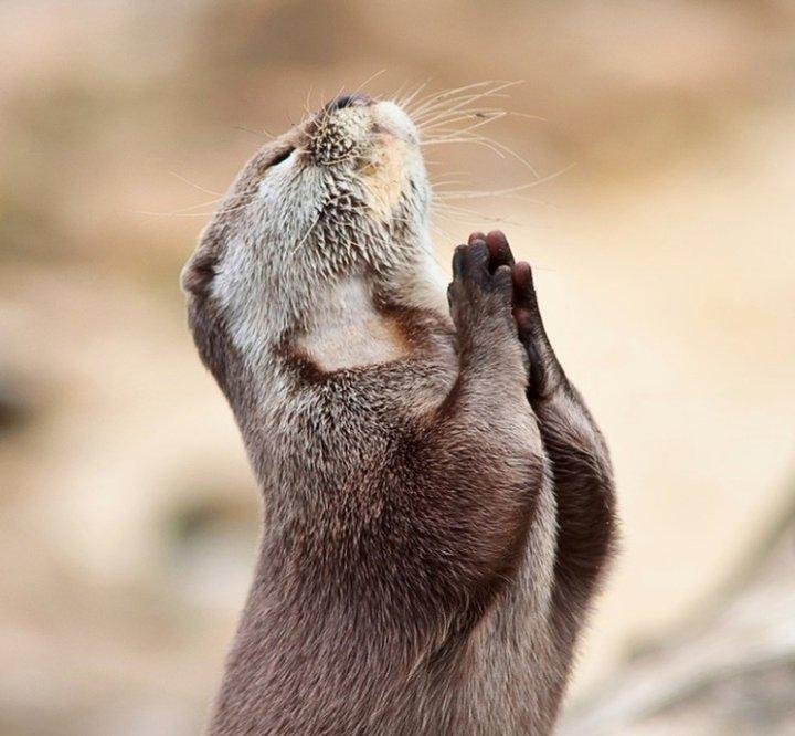 CST #305: Prayer