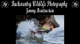 Artwork for Backcountry Wildlife Photography with Jimmy Breitenstein