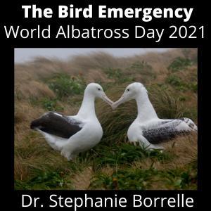 036 World Albatross Day 2021 - Steph Borelle from Birdlife Marine