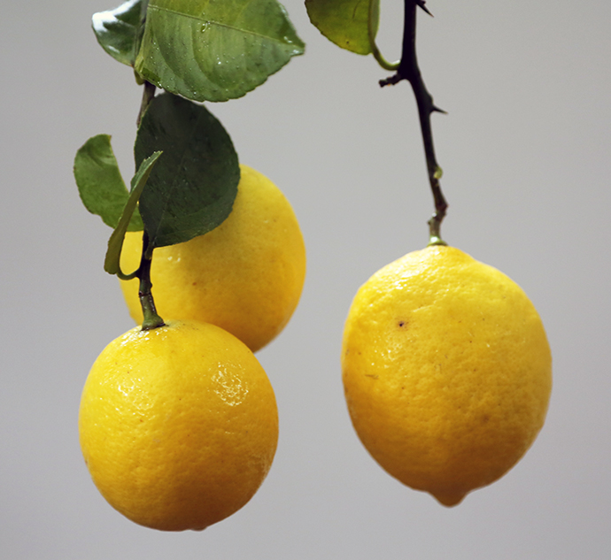 Meyer lemons can be grown as houseplants, but in some areas you'll find them growing in parks, yards and gardens...hint: always ask before picking them.