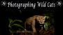 Artwork for Photographing Wild Cats