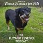 Artwork for FEP10 Essences for Pets
