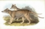 Artwork for 225 - Thylacines and Pademelons