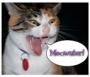 Artwork for Episode 6b - Bonus Episode! A Talking Cat Promo!?!